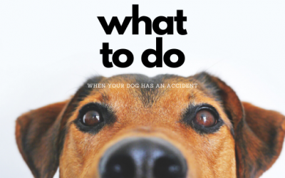 What To Do When Your Dog Has An Accident