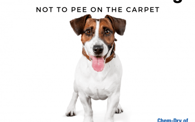 How To Train Your Dog Not To Pee On The Carpet